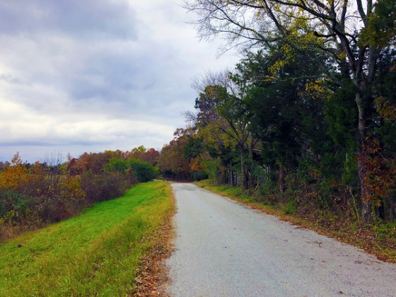 000 INDEPENDENCE RD, Huntingdon, Tennessee 38344, ,Land,For Sale,000 INDEPENDENCE RD,1125